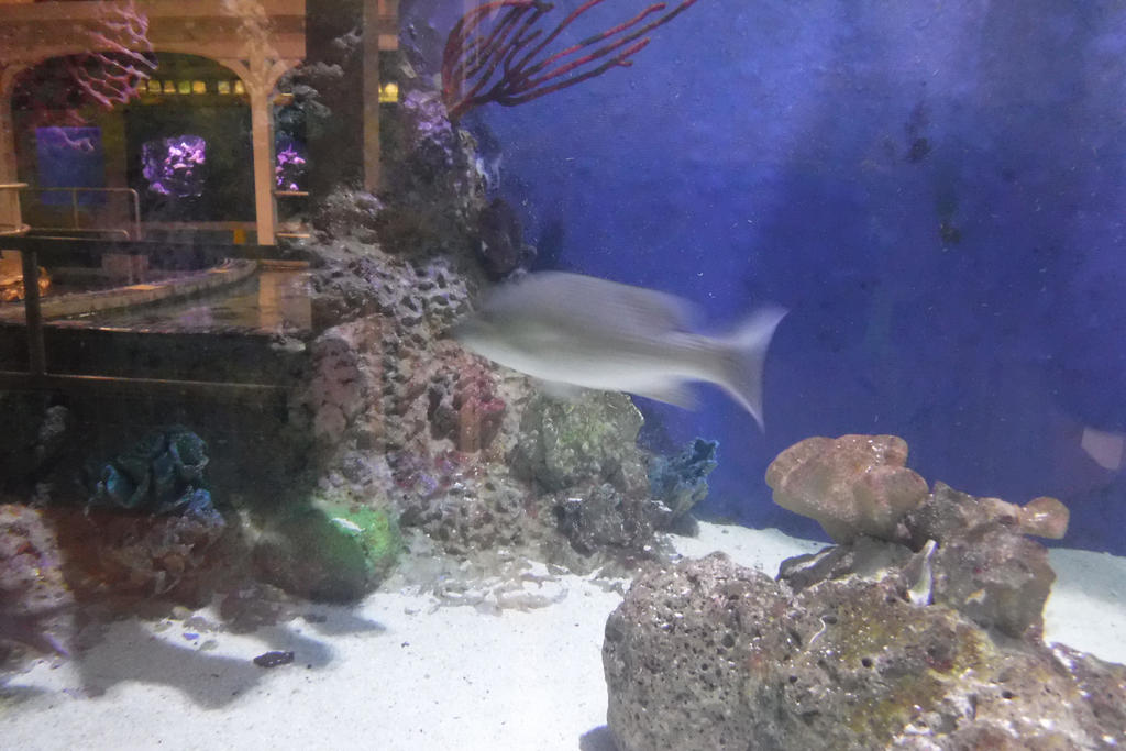The Key West Aquarium 21 By Oceanrailroader On Deviantart