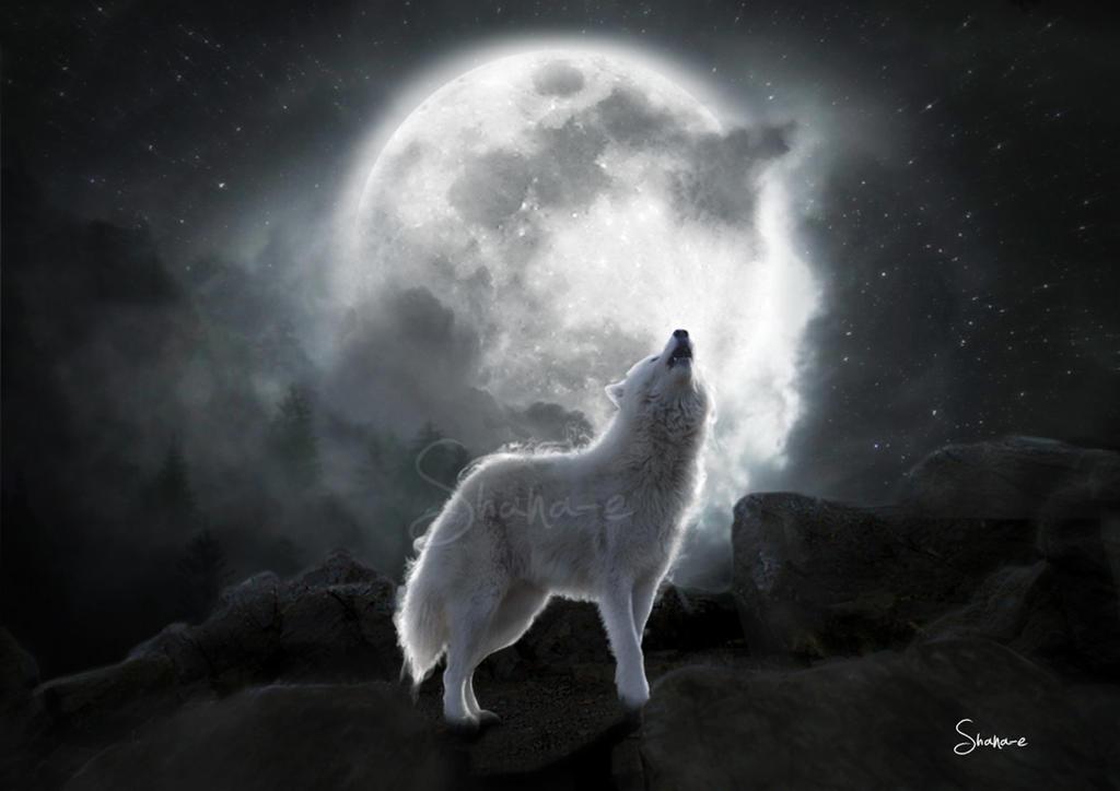 Wolf by Shana-e