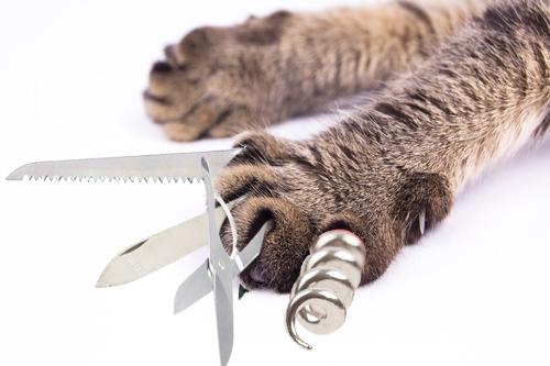 Cat swiss army knife