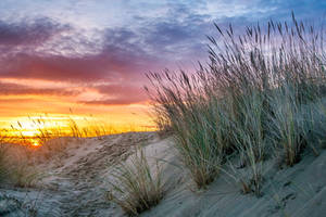 Sun dunes and oyats by Laurent-Dubus