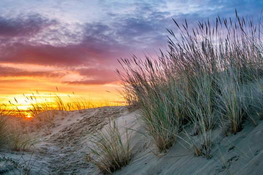 Sun dunes and oyats