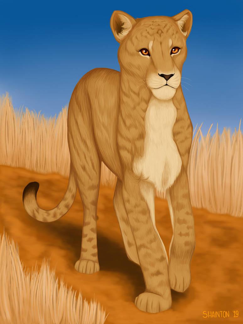 straying through the savannah