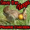 Save the Texas Prairie Chicken by kozmickicons