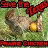 Save the Texas Prairie Chicken by kozmickicons