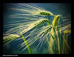 grains by ryuoroman