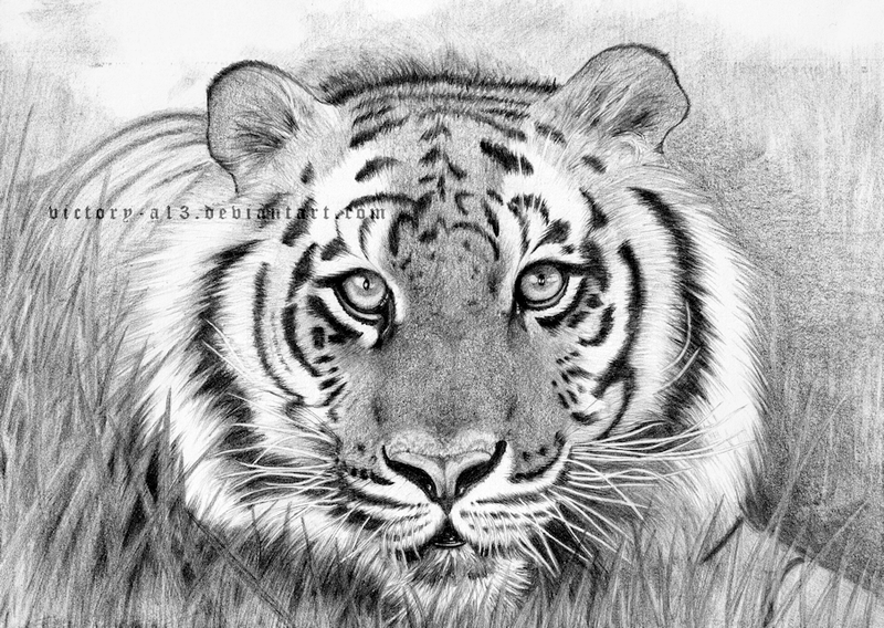 Tiger by victory-a13