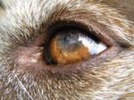 Candy's Eye