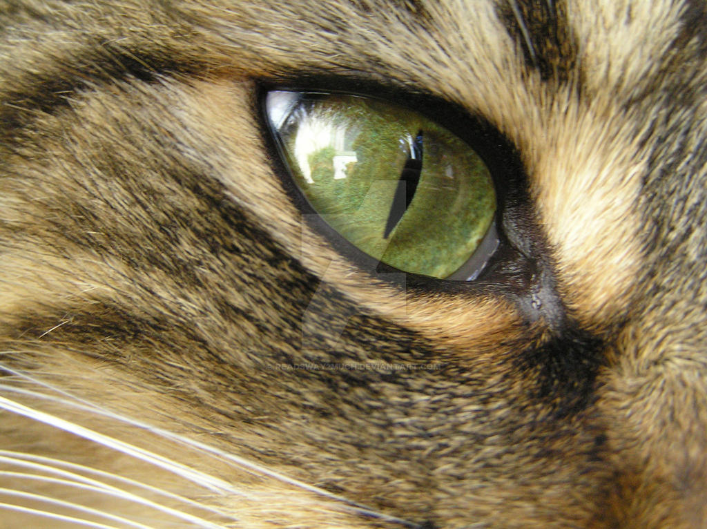 Rocky's Eye by Readsway2much