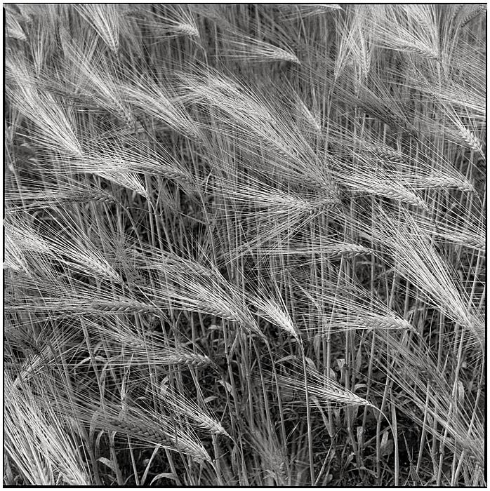 Field by rain1man