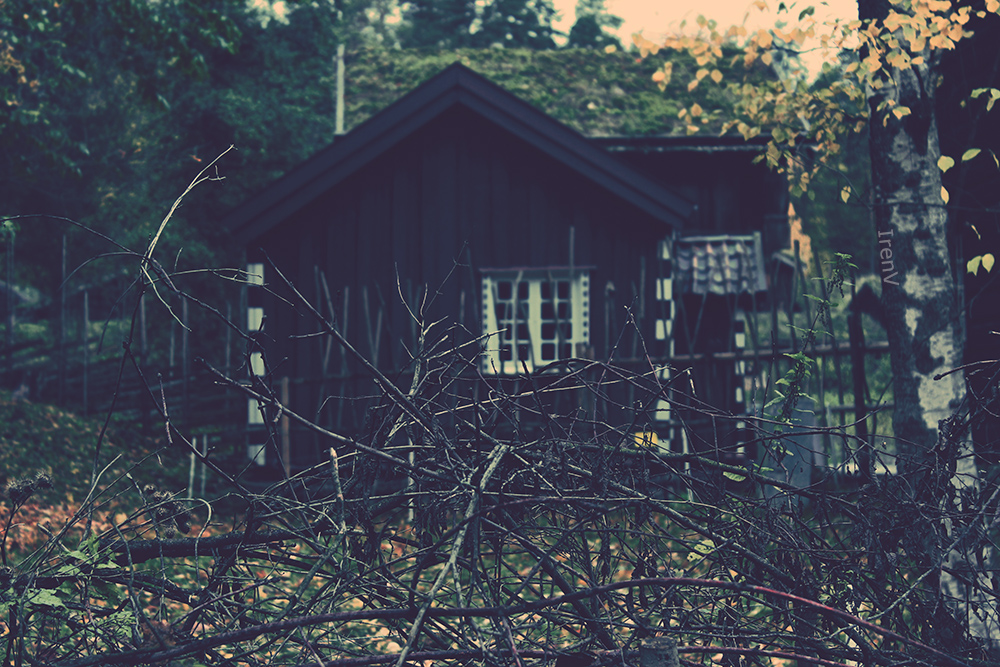 Cabin in the woods by irenv