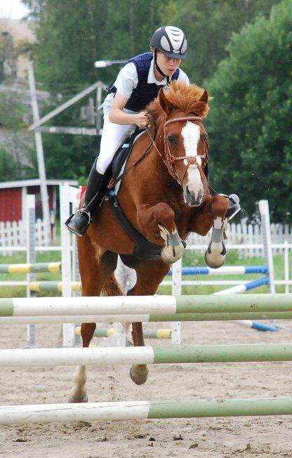 Horses Jumping ...