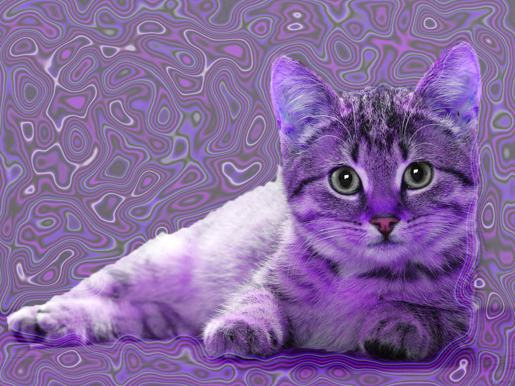 Purple Cat Girl