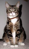 My cat Gorn