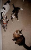 My Four Dudes by edwardvb