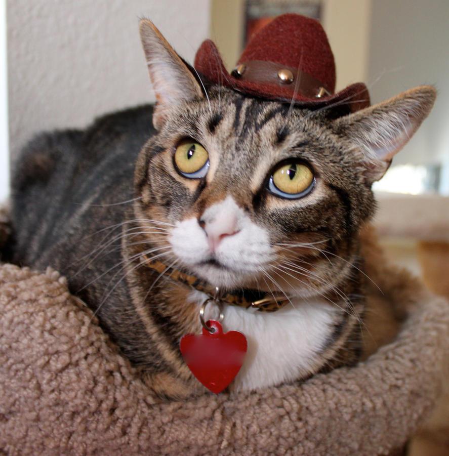 Cowboy Gorn by edwardvb