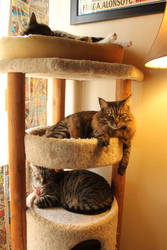 Three Cats In A Condo by edwardvb