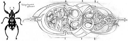 Pachyrrhynchus gemmatus sketch by pley