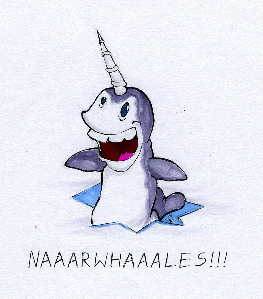 Narwhals  Narwhals    by anatonicumNarwhals Cartoon