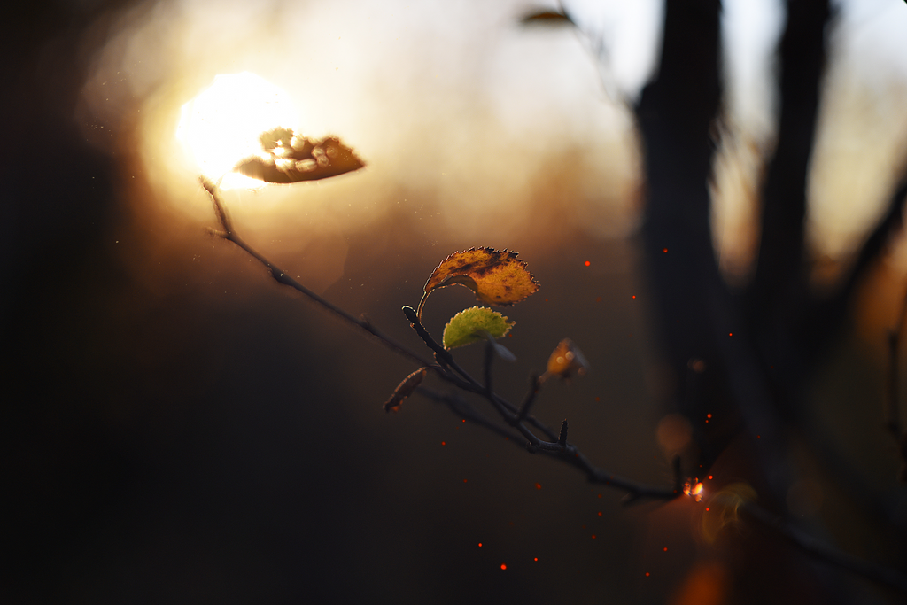 Autumn evening by brietolga