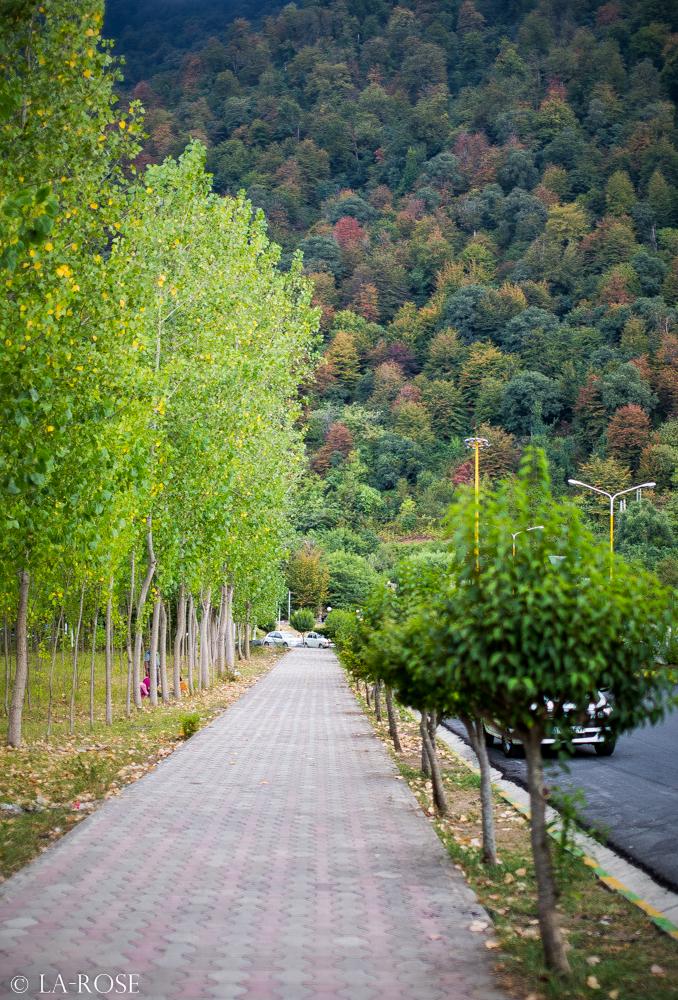 Path by La-Rose