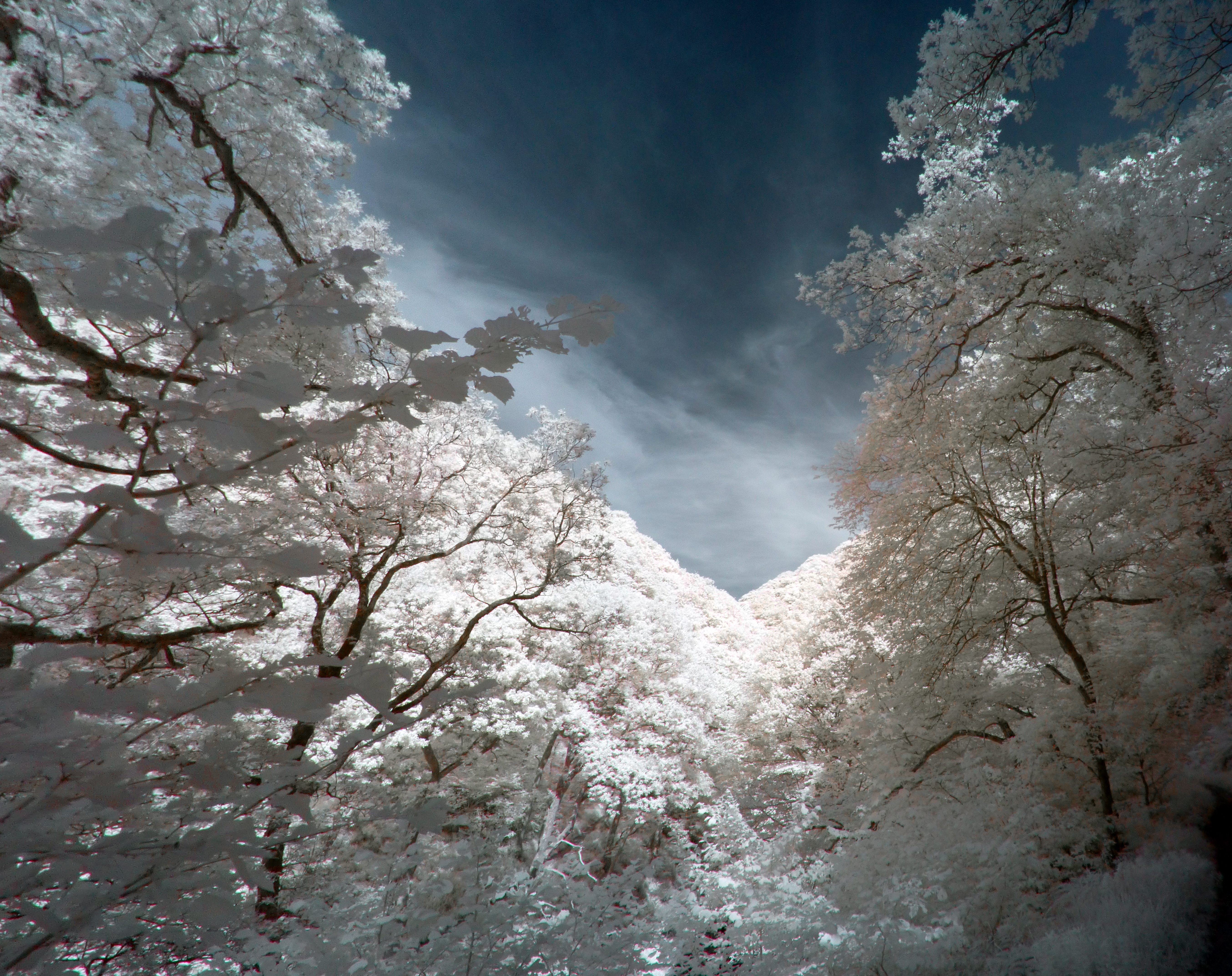 Infrared Landscape: 3 by yaschaeffer
