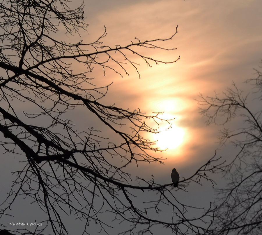Enjoying the sunset by Garden-Of-BlackRoses