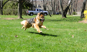 paisley a runnin