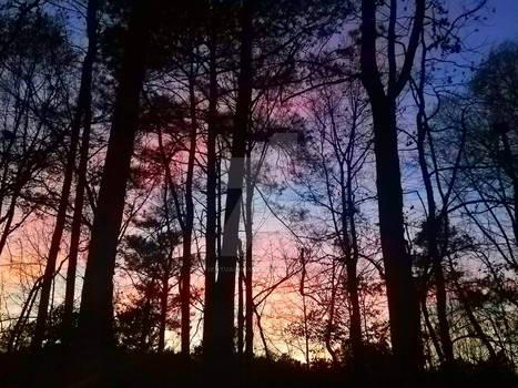 Georgia Skies