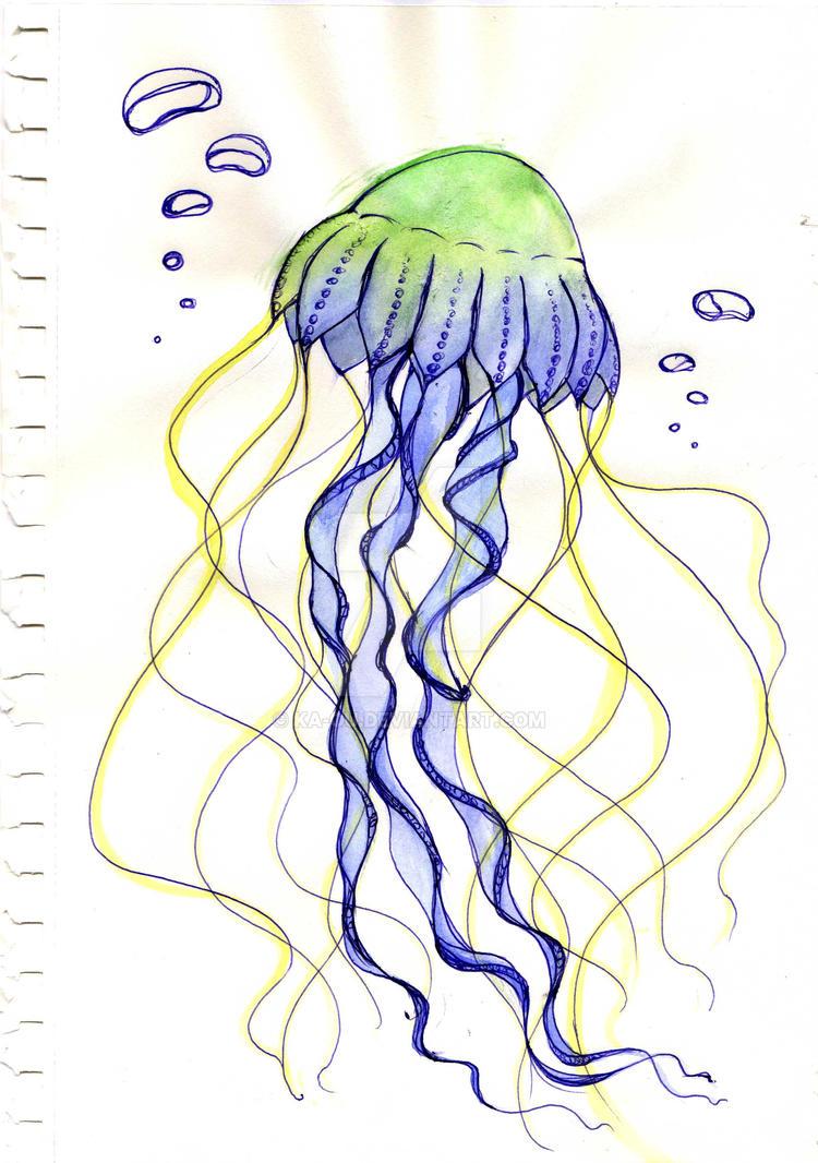 jellyfish sketch by ka ou