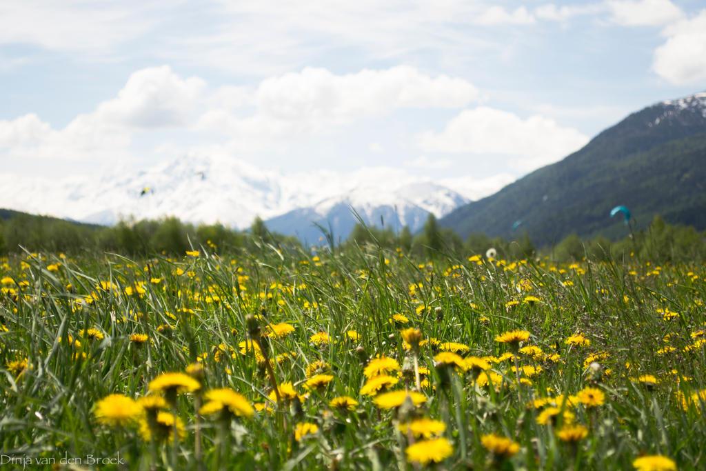 Field of summer