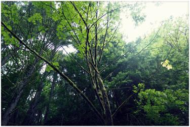 Tree by Ganderzz
