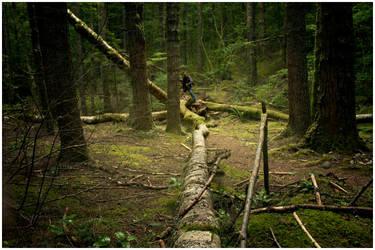 Tree Split by Ganderzz