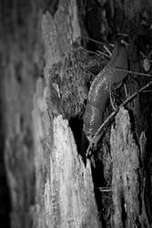 Slug by Ganderzz