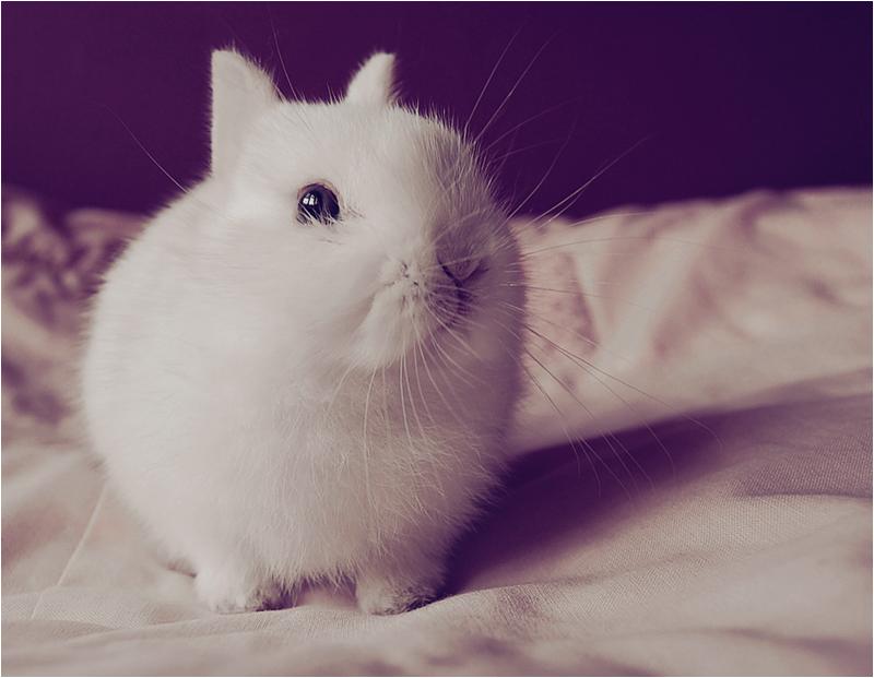 Bunny by mambulinka