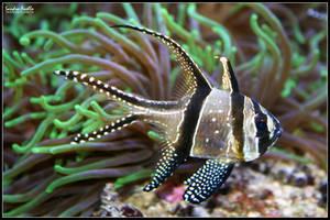 Fish by xXSidewinderXx
