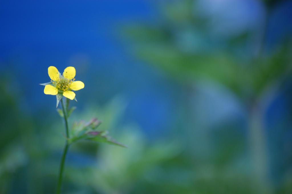 Sunshine Flowers by DeviantThought on DeviantArt