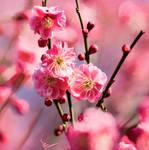 spring by tushonka