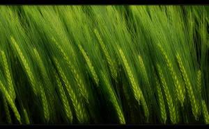 Green by Hartmut-Lerch