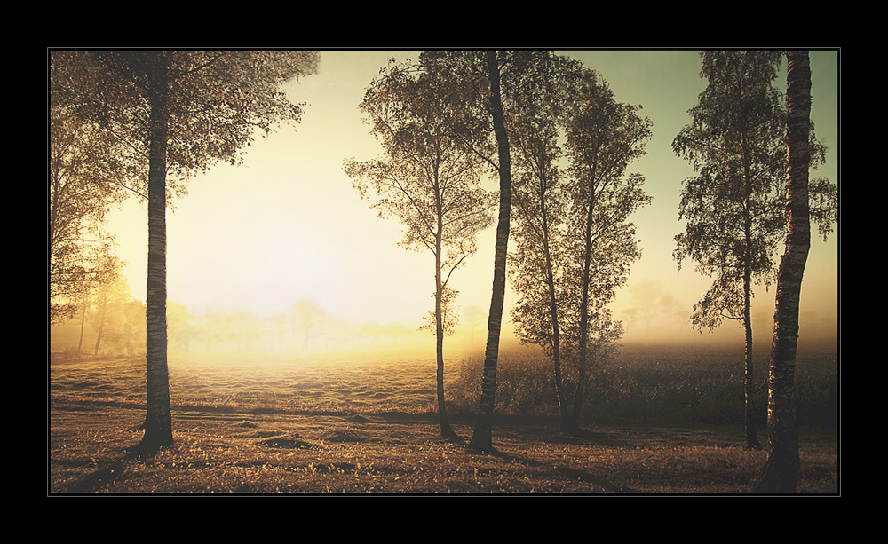 Morning mist by Hartmut-Lerch