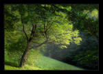 Light in the forest by Hartmut-Lerch