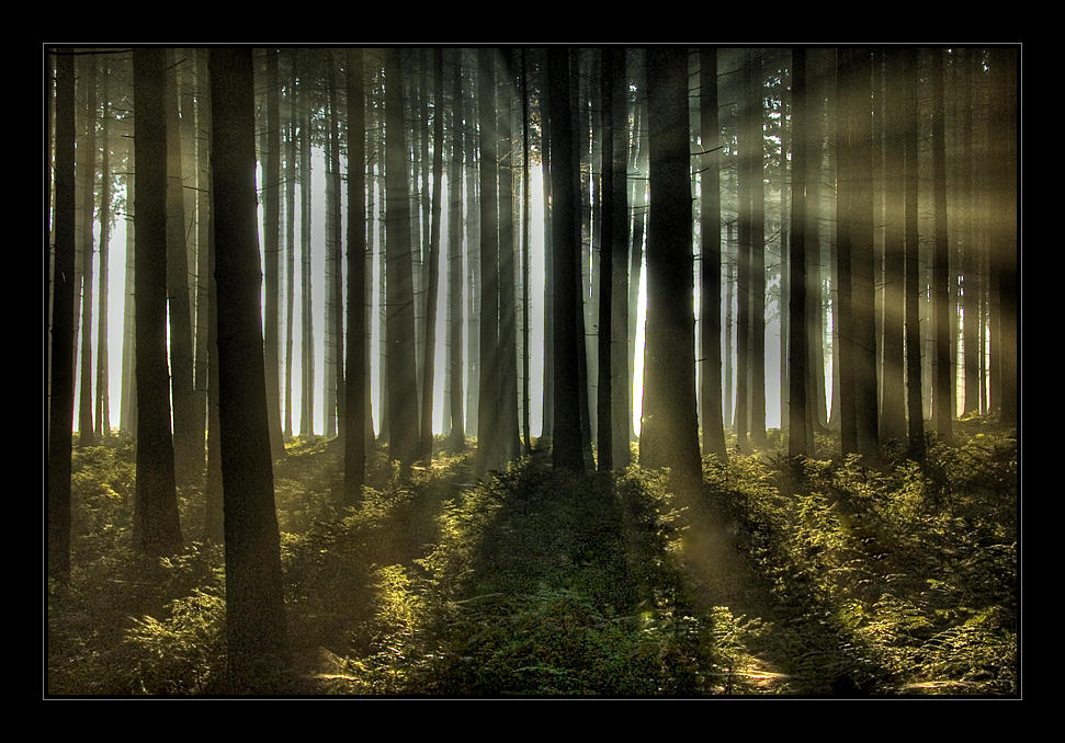 In the Forest by Hartmut-Lerch