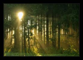 good morning by Hartmut-Lerch
