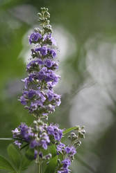 Purple Spire by Aldistar