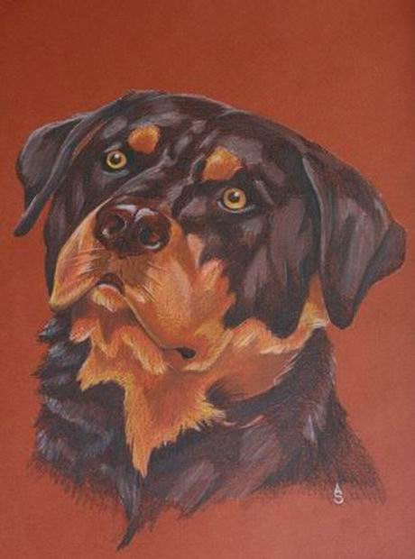 Rottweiler by Aldistar