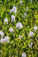 Purple Field by Aldistar