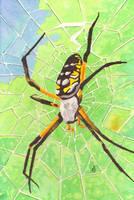 Banana Spider by Aldistar