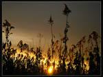 Zadnje sunce 4