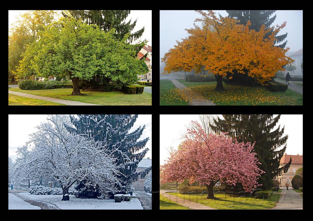 Seasons, take 1