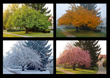 Seasons, take 1 by rafinerija
