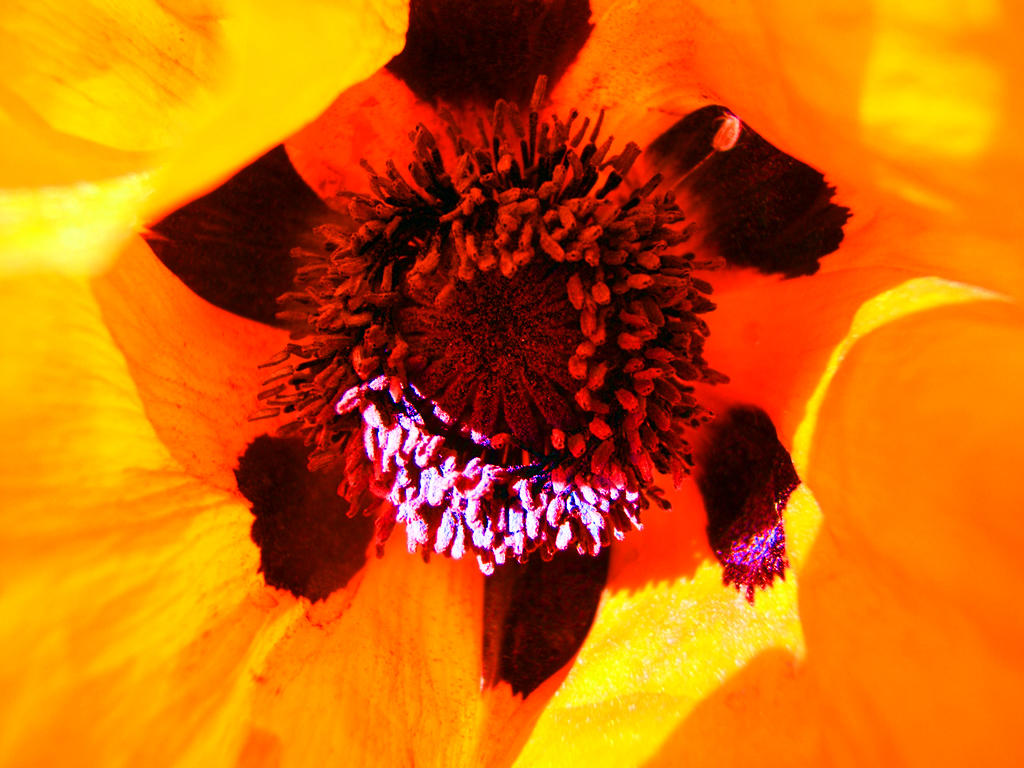 Orange Closeup by WolfPrincess-Stock